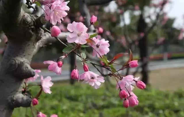 中式园林景观必备造景植物_7
