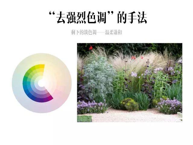 干货|庭院花园中的色彩搭配_15