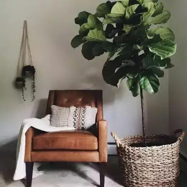 10种好养又漂亮的绿植,一不小心美爆你的家!