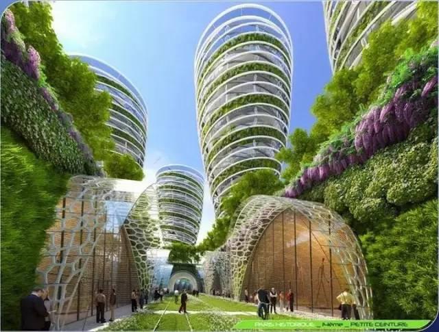 未来,我们生活在森林中