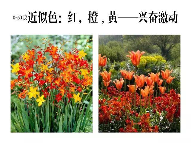 干货|庭院花园中的色彩搭配_9