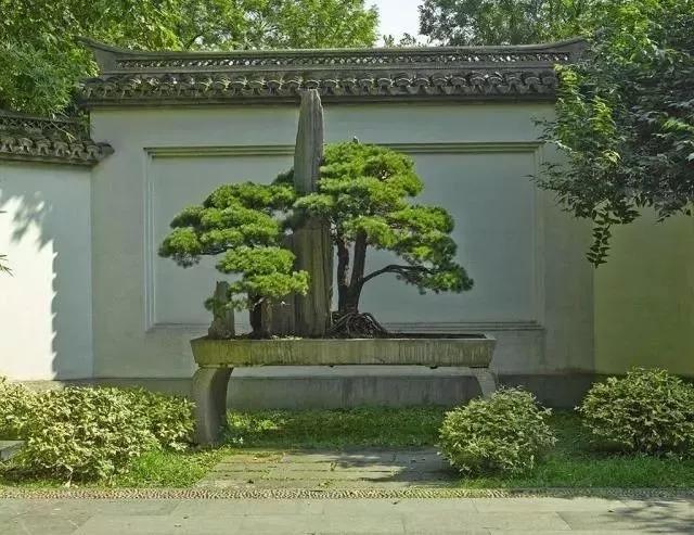 中式园林植物配置_园林景观设计中植物配置设计案例