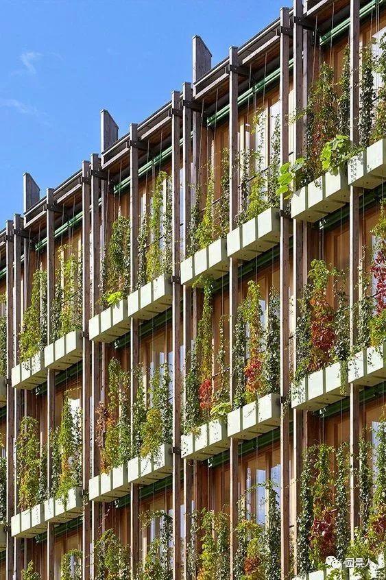 垂直绿化·会呼吸的墙壁_41