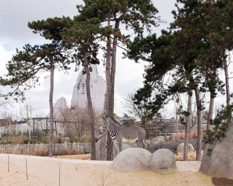 巴黎动物园-6