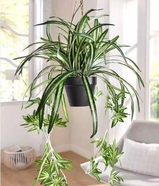 空气质量告急?这些扫霾植物排行榜中第一名竟然是......_37