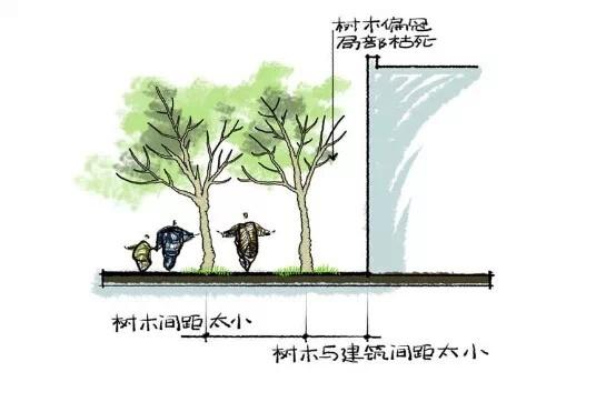 种植秘诀·图解园林景观之乔木种植技术-640.webp (2).jpg