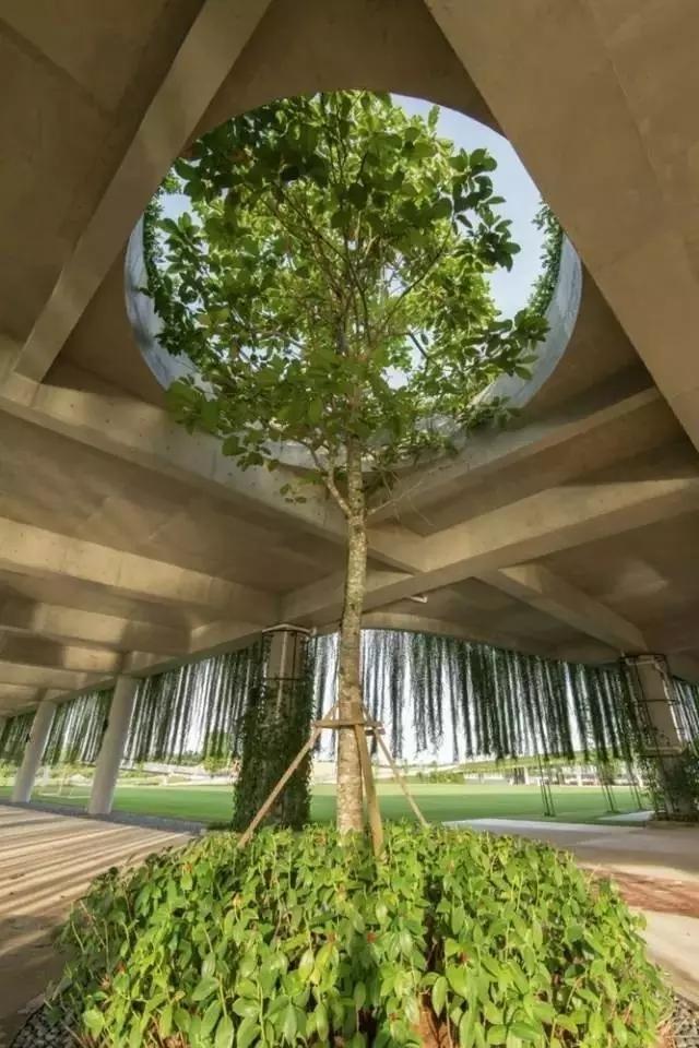 景观做得好丨给树让让路-640.webp (38).jpg