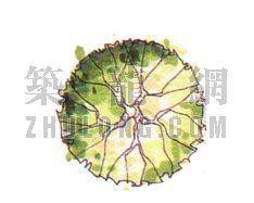 平面彩图树4