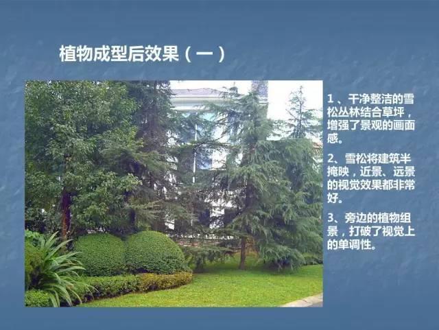 龙湖景观施工工艺标准效果(让你更懂现场)--软景篇_33