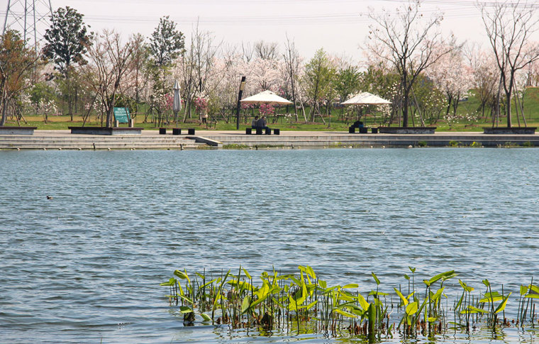 上海辰山植物园-17