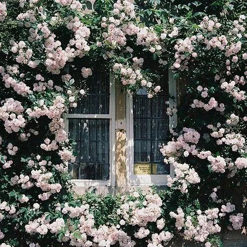 世界那么大,我却只想要个小院花开满园,自在从容……_6