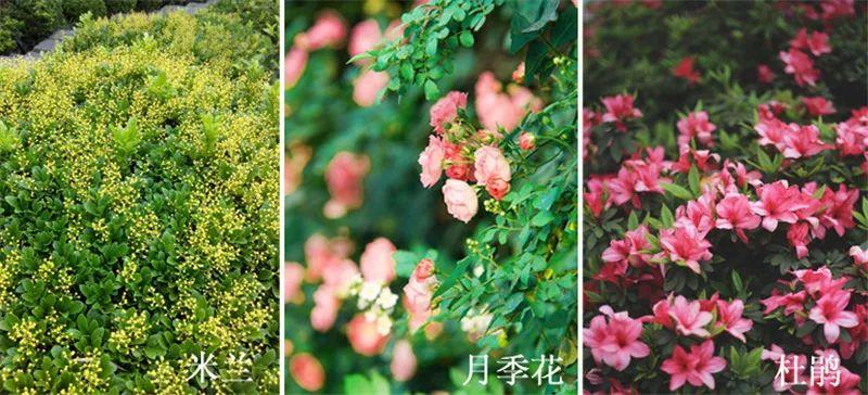 植物造景·实用景观设计来一波_38
