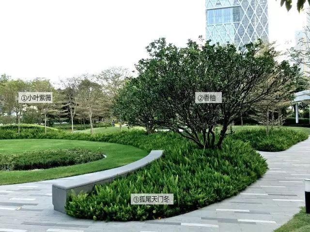 最详细图解:深圳湾三大豪宅景观植物配置!_32