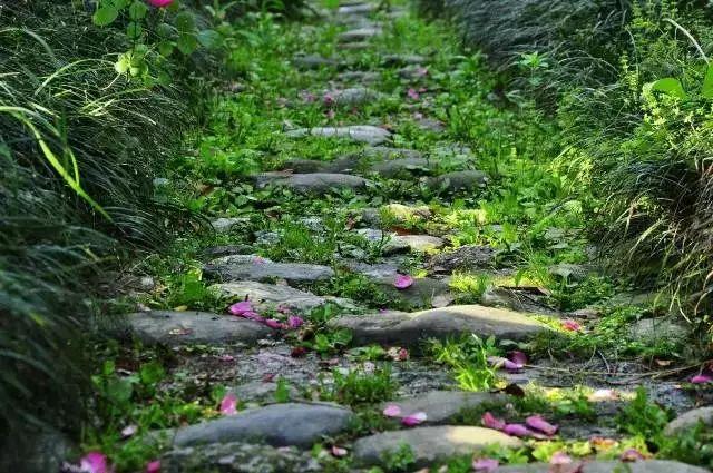 50款乡下小院,花做篱笆,诗意为墙。_22
