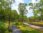 园林植物配置三大原则园林植物配置平面图与实景