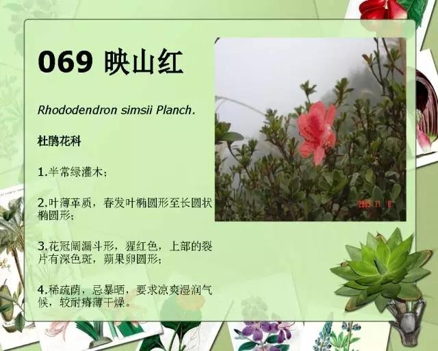 100种常见园林植物图鉴-20160523_183224_082.jpg