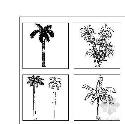 植物立面图400例