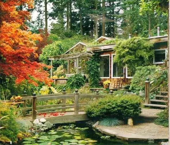 秋天庭院的美都被这几棵树承包了!