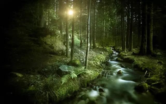 林下地被植物的应用及配置_6