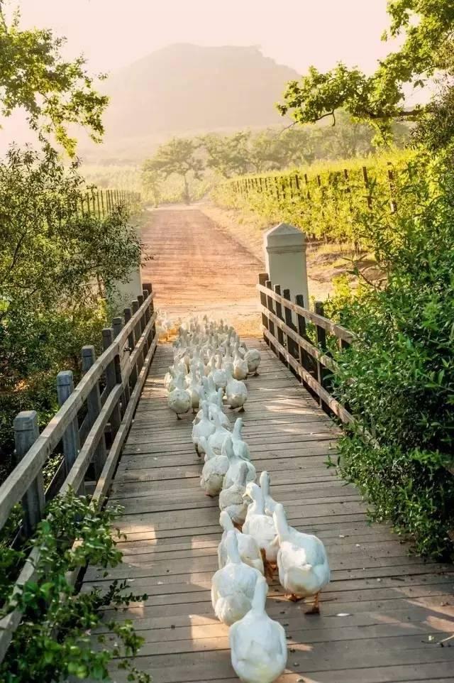 如何将一个农庄改造成乡村旅游圣地?_5