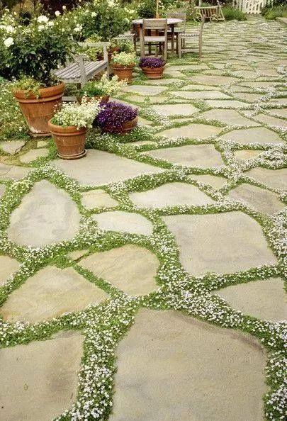不起眼的小野花,也可以给你的花园带来惊喜_4