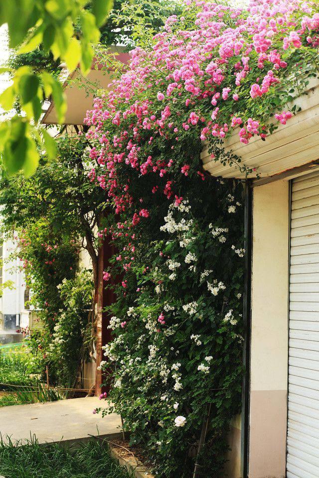 想要一个小院子,花开花落一辈子_2