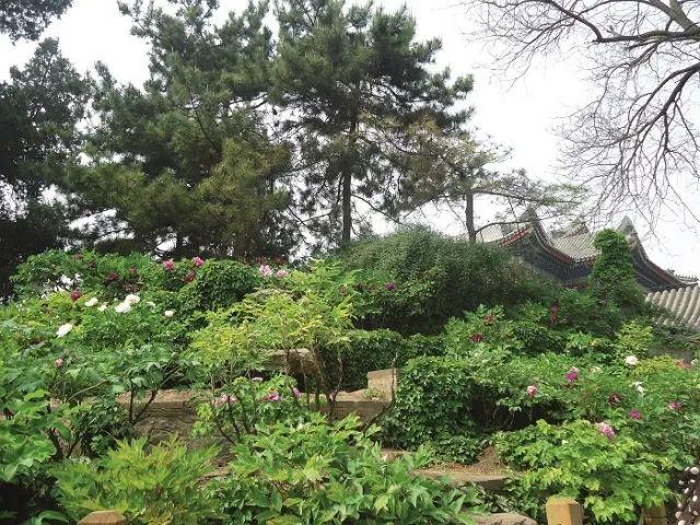 [植物配置]历史景观保护与重建中的植物景观营造_8