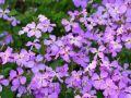 园林人必须知道的60个花卉基本知识点