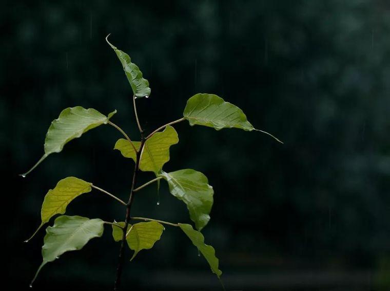 园林植物丨佛系植物——五树六花!
