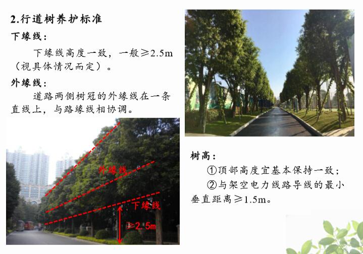 [园林施工管理]大型园林集团南部区域养护标准图例(阴生植物)-04行道树养护标准