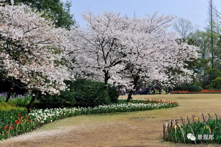 最吉祥的三十种庭院主景树_16