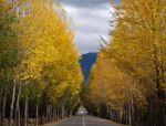 论公路沿线的景观规划与实施