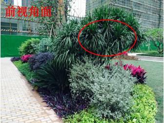 景观植物配置葵花宝典_87