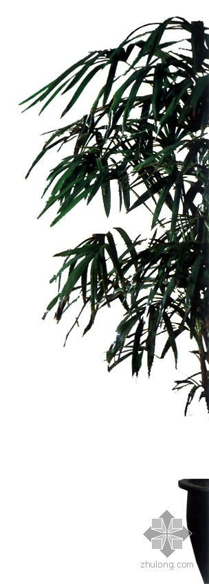 室内配景植物