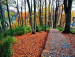 森林康养,让我们一起回归自然吧