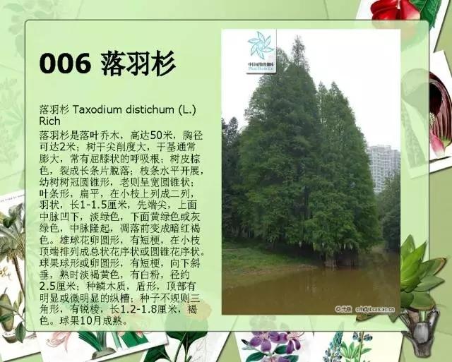100种常见园林植物图鉴-20160523_183224_008.jpg