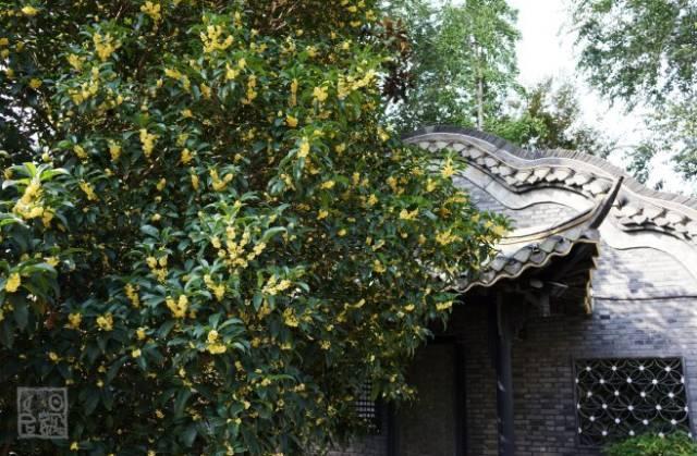 古代园林中,具有象征意义的植物有哪些?_5