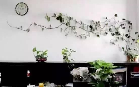 室内植物种什么对健康最有利!绿植净化误区你知道么?
