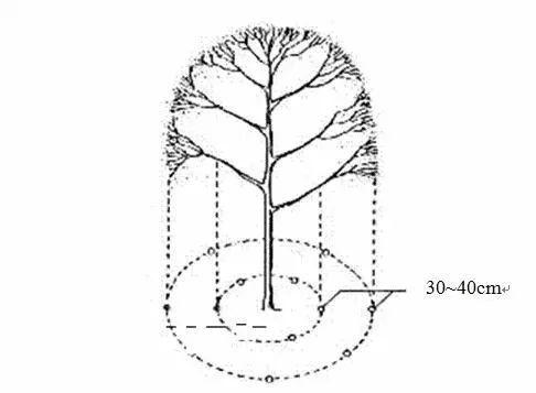 乔木、灌木、藤本植物养护技术规范!