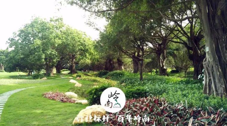 南湖公园|流淌的城市花园