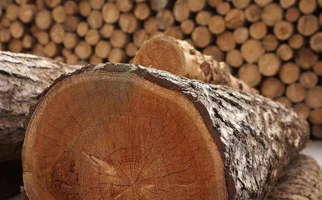 古典园林常用木材解析_4