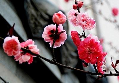 香花植物-嗅觉盛宴_2
