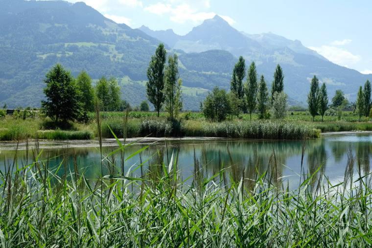 瑞士LowerFactoryPond水系环境修复-12
