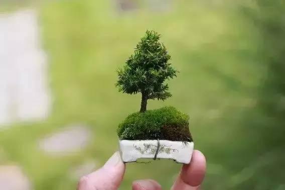 绿植这样摆,你家比园林还要美!_8