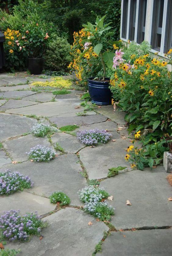 不起眼的小野花,也可以给你的花园带来惊喜_3
