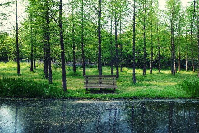 17-上海共青国家森林公园景观设计第17张图片