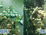景观生态技术的应用-看人工浮岛发展的起起落落