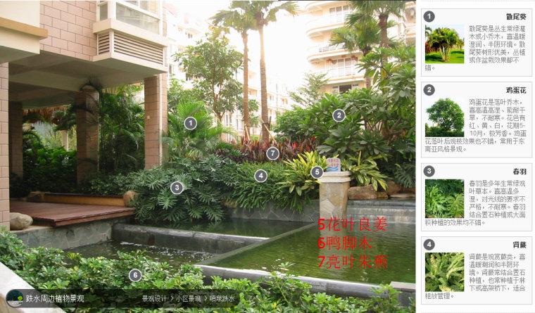 104组精彩植物配置案例(实景效果+植物品种)_35