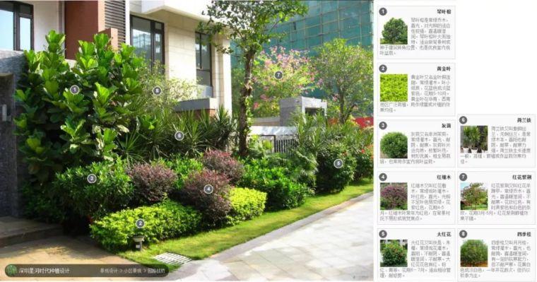104组精彩植物配置案例(实景效果+植物品种)_10