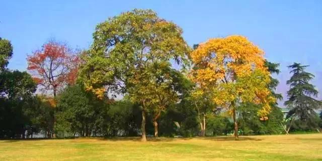"""这些必备的""""植物造景"""",不止是种树种花_33"""
